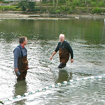 Juvenile Salmon Survey